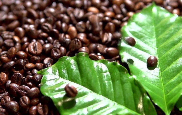 القهوة أحادية الأصل - الدليل الكامل