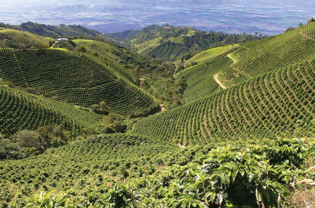 المناخ والزراعة حبوب قهوة بيرو